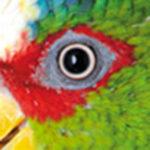 Animalia Presse