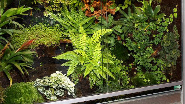 Pour mélanger certaines espèces, la première règle est d'optimiser la taille du terrarium et le décor, ce qui permet d'offrir plusieurs territoires et suffisamment de cachettes. Photo : Gireg Allain.
