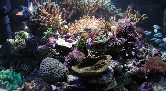 Vue rapprochée de l'aquarium.