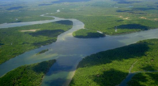 Le célèbre fleuve Amazone et ses affluents offrent de nombreux types de biotopes que les amateurs apprécient de reconstituer dans un aquarium. Photo : Urbanhearts