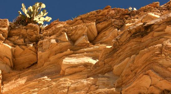 Les falaises de roches sédimentaires ocre jaune façonnées par l'érosion sont typiques des déserts du Chihuahua. Au sommet de la falaise on aperçoit des opuntias et, accrochés au flanc, un grand nombre de nids, vraisemblablement ceux de l'hirondelle à front blanc (Petrochelidon pyrrhonota). Photo : AR - Fotolia
