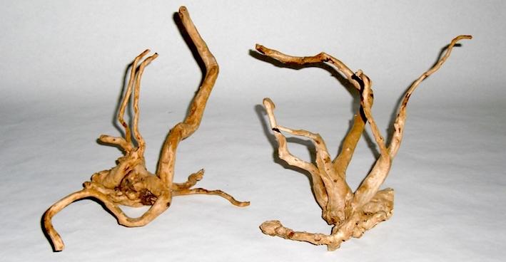 Ces racines fines et tortueuses apportent un peu d'originalité en comparaison des bois trouvés en animalerie. Tout comme le bois de mopani ou d'opuwa, elles ont déjà subit un sablage qui réduit avantageusement leur préparation. Photo : Sylvain Van Waerebeke
