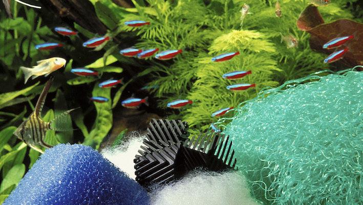 L'équilibre général d'un aquarium peut difficilement se passer d'un mode de filtration adapté. Photo : Aqua Press