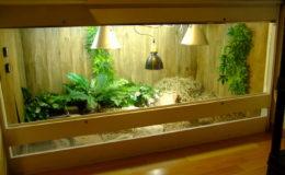 Vue d'ensemble du terrarium, à gauche la zone humide, à droite le tas de foin servant d'abri. Les lampes chauffantes céramiques se trouvent dans les réflecteurs en aluminium, au milieu, le spot HQI assurant le point chaud.