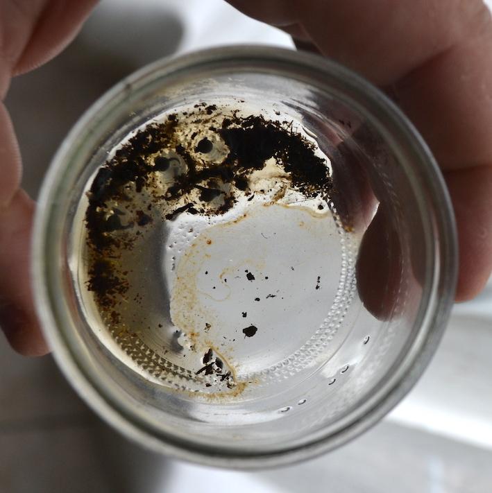 Oeufs de dendrobates fraichement récoltés. Photo : Philippe Royer