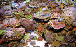 La plénitude d'un aquarium marin passe aussi par la sérénité de son intégration dans l'espace de vie de son soigneur et de sa famille. Les bruits divers, particulièrement ceux de la descente d'eau, doivent être anticipés... Heureusement, il existe des solutions efficaces. Photo : Aqua Press