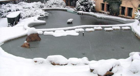 L'hiver vient d'étendre son blanc manteau sur le bassin… mais auparavant, les poissons ont-ils été bien préparés pour résister aux températures les plus basses ? Photo : Aqua Press