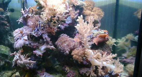 Décor en Aquaroche dans un aquarium récifal. Photo : Aquaroche