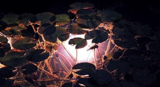 Les éclairages immergés donnent une allure fantomatique à la pièce d'eau. Ils permettent également d'observer les poissons qui évoluent encore à la tombée de la nuit. Photo : Laguna