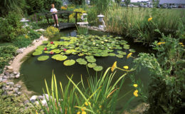 Un beau bassin n'est que rarement le fruit du hasard. C'est grâce à son entretien régulier, au gré des saisons, qu'il conserve le meilleur aspect. Photo : Aqua Press