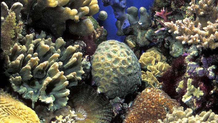 La température excessive est un ennemi pour l'aquarium : les populations soumises à une température dépassant la limite de 30 °C sont en danger mortel. Les fabricants proposent désormais une large gamme de refroidisseurs qui utilisent différentes technologies. Photo : Aqua Press