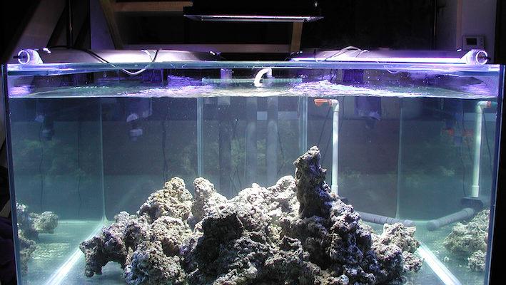 Les pierres vivantes sont disposées dans l'aquarium de sorte à ce qu'elles soient brassées le mieux possible et à pouvoir siphonner la majorité des sédiments qu'elles vont libérer. Le décor définitif sera réalisé ultérieurement. Photo : Vincent Rollet