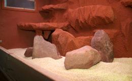 Mise en place d'une ambiance australienne en terrarium, avec un décor sablé et des roches disposées à l'avant-plan. Un sable rouge aurait été plus typique, mais le décor aurait été trop uniforme. Mieux vaut employer le sable rouge avec des roches plus claires. Photo : Gireg Allain