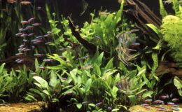 Un aquarium est bien entretenu grâce à une succession de tâches régulières, facilitées par des outils spécialisés. Photo : Aqua Press