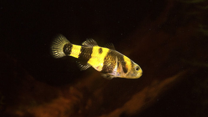 Jeune mâle d'environ 8 mois… Photo : Aqua Press