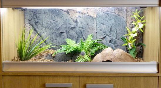 Les terrariums en panneaux mélaminés s'intègrent parfaitement aux intérieurs modernes (Modèle Vivexotic). Photo : A. Bour
