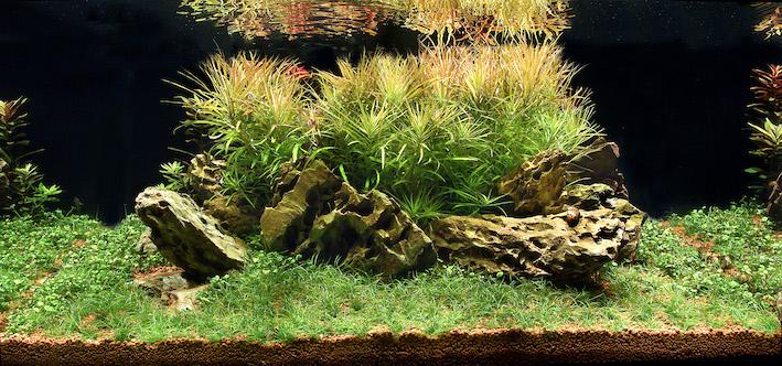 L'aquarium planté résonne avec sol nutritif. De nombreuses options s'offrent aux amateurs. Photo : Aqua Press