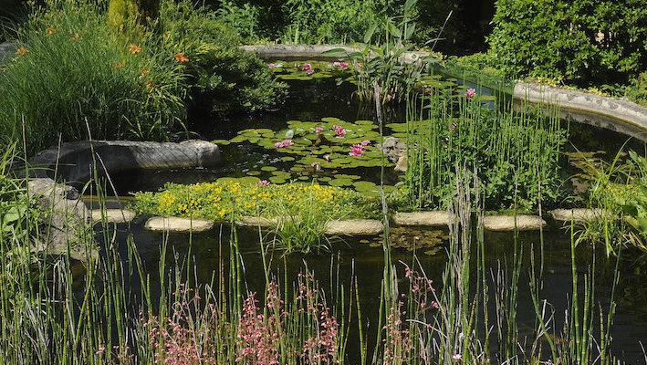 Le bassin est souvent la pièce centrale du jardin… Toutefois, il ne peut resplendir sans un arrière-plan esthétique. D'où la nécessité d'un choix pertinent concernant les végétaux qui vont l'accompagner. Photo : Aqua Press