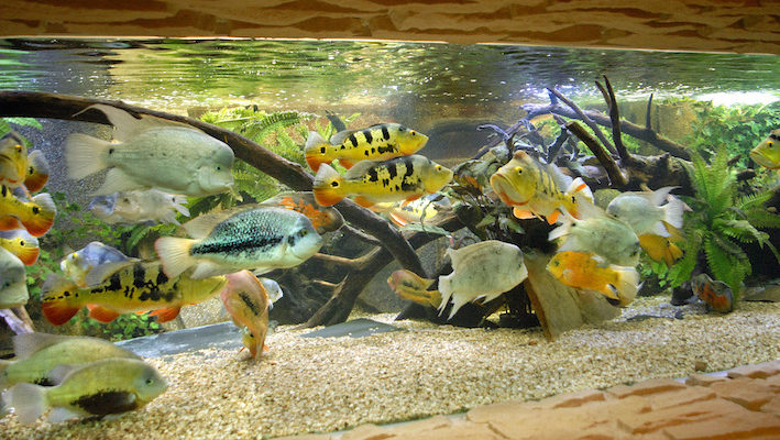 La densité en poissons semble énorme, mais en fin de compte, elle est adaptée au gigantisme de l'installation.