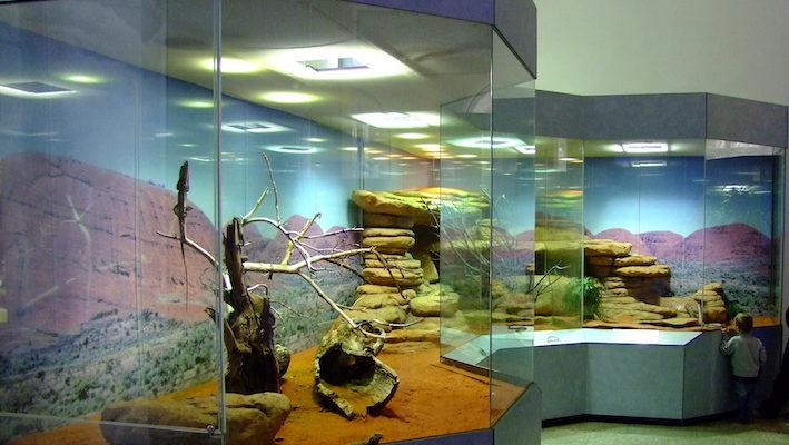 Le grand terrarium australien avec une partie pour les lézards (agames barbus, agames à collerette et varans) et au fond celle pour le couple d'Aspidites melanocephalus. Photo : Vincent Noël