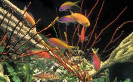 Partout dans le monde, les aquariums récifaux fonctionnent depuis près de trois décennies avec de l'eau de mer naturelle et de l'eau de mer synthétique ! Photo : Aqua Press