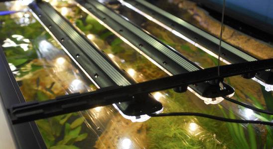 Les réglettes AquaBeam/GroBeam 500 de Tropical Marine Centre sont alignées sur une cuve comme le seraient des tubes fluorescents. La lumière des LED, sources lumineuses ponctuelles, pénètre bien la colonne d'eau. Photo : Aqua Press