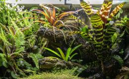 La lumière est indispensable à la croissance des plantes, la puisance, le choix du spectre et la durée d'éclairage sont ds éléments essentiel. Photo : Philippe Royer