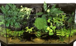 Les plantes terrestres sont l'une des clefs de l'ambiance recréée dans un aquaterrarium. Photo : Aqua Press