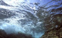 """Dans la nature, les mouvements de l'eau sont aussi variés que peut l'être la structure des fonds marins, combinée aux phénomènes météorologiques. Le """"challenge"""" est d'arriver à reconstituer ces mouvements d'eau dans l'intérêt des hôtes de l'aquarium. Photo : Aqua Press"""