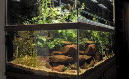 Vue générale de l'aquaterrarium. L'intérêt d'une telle installation réside dans la continuité du décor entre les parties aquatique et terrestre. Photo : Aqua Press