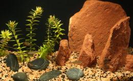 Un petit aquarium d'une dizaine de litres, même provisoire, peut servir à la maintenance de quelques poissons dans un décor simple mais esthétique. Ici, quelques Tanichthys albonubes. Photo : Gireg Allain