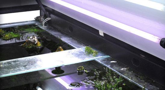 Les tubes T5 sont très appréciés en aquascaping. Outre leurs performances et leur durée de vie respectable, ils offrent la possibilité de faire des mélanges de couleurs afin d'obtenir l'ambiance souhaitée. De plus ils éclairent toute la surface de l'aquarium de manière homogène. Photo : Aqua Press