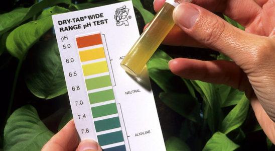 Le pH, ou potentiel hydrogène, est un indicateur intéressant à mesurer de manière régulière et à heure fixe afin de connaître l'état de santé générale de l'aquarium. Photo : Aqua Press