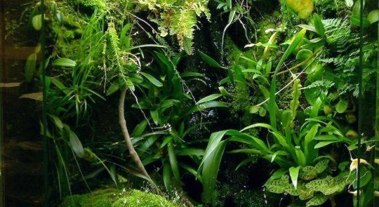 Un terrarium planté permet de reconstituer un magnifique biotope miniature, mais son entretien nécessite des interventions quotidiennes. Photo : courtoisie Vivaria Projects.