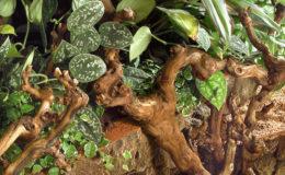 Le mur végétal qui prolonge le bassin d'intérieur offre une touche de verdure au salon, tout en apportant une légère humidité qui peut être bienvenue dans nos environnements souvent surchauffés et trop secs. Photo : Aqua Press