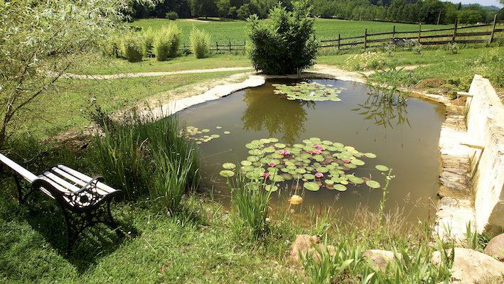 L'impatience gagne souvent devant un bassin encore vide de poissons, à attendre que le milieu soit biologiquement adapté à leur accueil. Les conditionneurs d'eau permettent d'accélérer le processus en neutralisant le chlore et les métaux lourds. Cela permet d'ensemencer en bactéries idéales pour la transformation rapide des nitrites en nitrates ; et de là, de pouvoir enfin accueillir les premiers poissons. Photo : Aqua Press