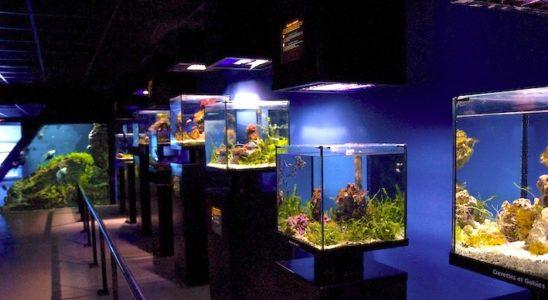 La série des petits cubes, présentant des habitats précis du récif. Passionnant ! Photo : Sabine Penisson