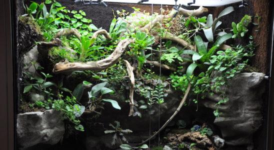 L'éclairage est un élément essentiel du terrarium planté. Pour que les plantes puissent réaliser leur photosynthèse, il faut impérativement employer des lampes horticoles. Photo : B. Guillon-Cottard Kanopée store.