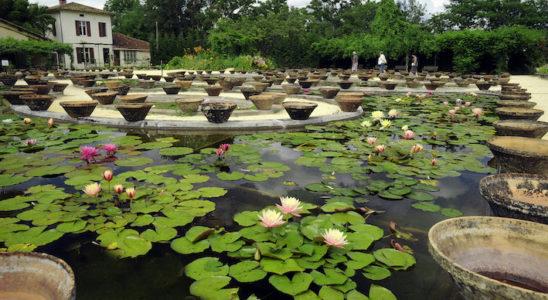 Latour-Marliac est la première pépinière à s'être consacrée aux jardins aquatiques. On aperçoit ici quelques-uns des magnifiques bassins de culture de Nymphaea. Photo : Aqua Press (Latour-Marliac)