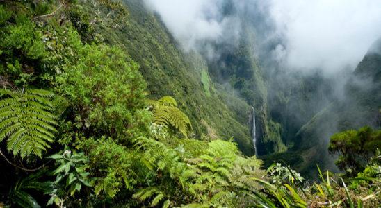 Du fait de l'importance des précipitations, les forêts tropicales sont toujours très humides. En altitude, comme la température est moins clémente, il y règne des brumes permanentes. Ici, le Trou de Fer, île de La Réunion. Photo : Frog 974 — Fotolia