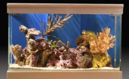 Les nano- et pico-récifs permettent de découvrir l'intimité du récif corallien, invisible pour une personne non initiée. Photo : Aqua Press – Aqua Lyon