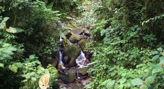 Une petite cascade de la forêt tropicale costaricienne où l'on peut observer divers reptiles et amphibiens, dont l'anole Norops capito.