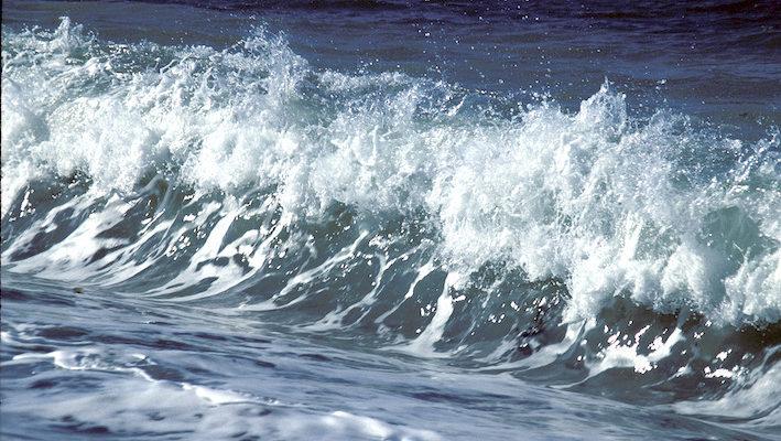 L'équilibre physico-chimique, dans le milieu naturel, est extrèmement stable et offre de nombreuses opportunités pour le developpement des espèces animales et végétales. Photo : Aqua Press