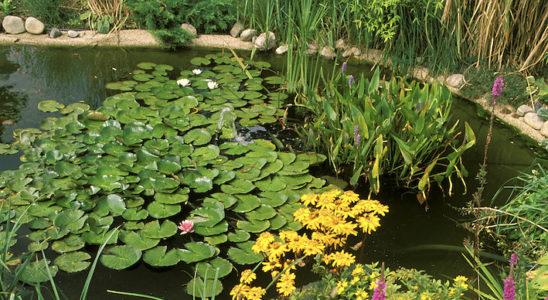 Un bassin ne peut rester beau sans une intervention régulière de son propriétaire. Il est recommandé de procéder à plusieurs petits nettoyages durant l'année. Photo : Aqua Press (Sera)