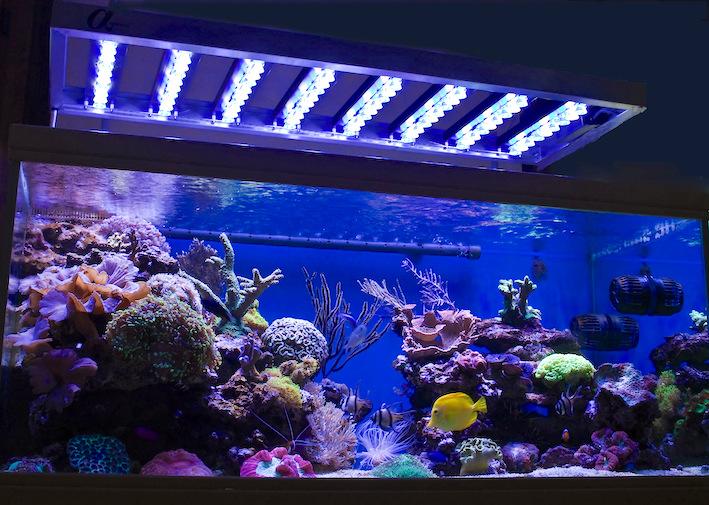 Luminaire modulaire à LED de la gamme Alpheus sur un aquarium récifal. Photo : Jean-Louis Cuquemelle