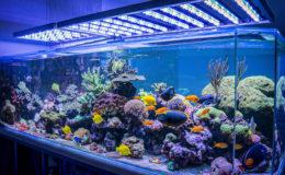 """Exemple d'aquarium récifal avec un luminaire à LED Alpheus. Cet aquarium a fait l'objet d'un """"Exemple à suivre"""" dans ZebrasO'mag N°25. Photo : Sabine Penisson"""