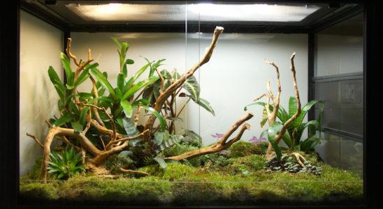 Un terrarium planté est toujours un ravissement pour l'œil, mais avant d'en arriver là, un travail de préparation est nécessaire. Photo : G. Allain