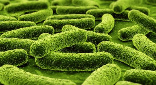 De nombreuses bactéries sont capables d'accumuler des polyphosphates (Aeromonas spp., Moraxella spp., Alacaligenes spp., Enterobacter spp., etc.) Photo : zentilia
