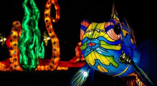 Océan en voie d'illumination @MNHN - F-G. Grandin