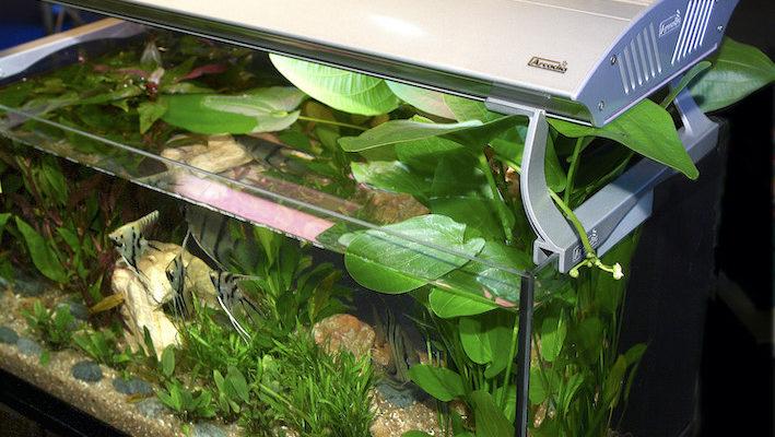 Rien ne sert de posséder un éclairage surpuissant si les apports d'engrais et de CO2 ne sont pas proportionnels. En effet, un seul élément en quantité insuffisante, appelé facteur limitant, risque d'interrompre la croissance des plantes au profit des algues. Photo : Aqua Press / Arcadia